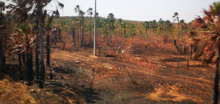 Viehweiden im Amazonas wachsen in dreißig Jahren um 74 Prozent